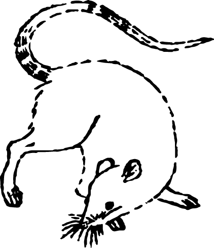 Free illustration of white mouse