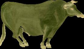 越前牛の浮世絵無料イラスト素材
