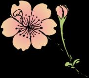 帆立桜の浮世絵イラスト素材(着色ver.)